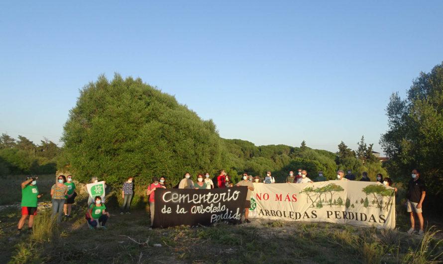 Pretenden construir 1.260 viviendas en uno de los mejores bosques de la Bahía de Cádiz